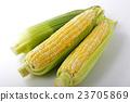 玉米 作物 蔬菜 23705869