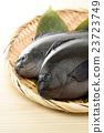 魚 鹹水魚 海水魚 23723749