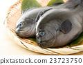 魚 鹹水魚 海水魚 23723750