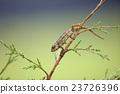 變色龍 爬行動物 爬蟲類的 23726396