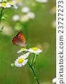 蝴蝶 蟲子 漏洞 23727273