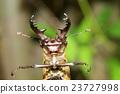 漏洞 甲殼蟲 鋤頭形頭盔 23727998