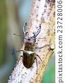 甲殼蟲 蟲子 漏洞 23728006