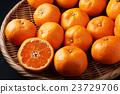 橘子 23729706
