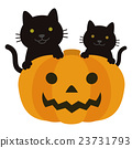 Halloween pumpkin and black cat 23731793