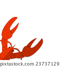 Isolated Flat Lobster on white empty background 23737129