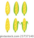 Yellow corn in flat and realistic style 23737140
