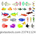 Aquarium Fish Isolated on White Background 23741124