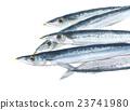 生秋刀魚 23741980