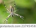 spider, spiderweb, insect 23745458