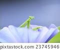 蟲子 漏洞 昆蟲 23745946