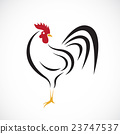 Vector of cock design on white background. 23747537