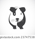 Vector of guinea pig design on white background. 23747538