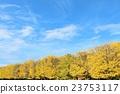秋天 風景 兩旁種上銀杏樹 23753117