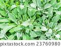 잎, 이파리, 잎사귀 23760980