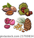 Collection of walnuts, chestnuts, pine nuts and 23769834