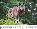 신린 늑대 23770470