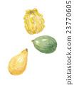 西葫芦 蔬菜 南瓜 23770605