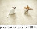 小貓 貓 貓咪 23771049
