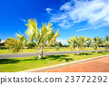 Plam tree garden under blue sky 23772292