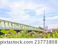 晴空塔 东京晴空塔 桥梁 23773808