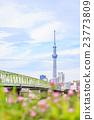 晴空塔 东京晴空塔 桥梁 23773809