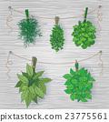 vector set herbs 23775561