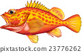 矢量 石頭魚 魚 23776262