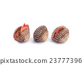 Raw blood cockle isolated on white background 23777396