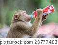 瓶子 饮料 喝 23777403