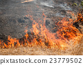 Fire burning dry grass field in Thailand 23779502