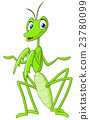 Praying mantis 23780099