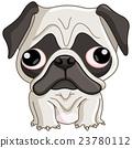 Pug dog 23780112