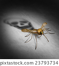 Mosquito Disease 23793734