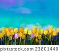 Oil painting tulips  flowers at field 23801449