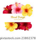 vector hibiscus flower. invitation card. 23802378