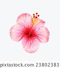 bloom, blossom, flower 23802383