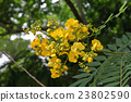 yellow flowers 23802590