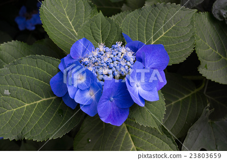 푸른 크아 지사이 23803659