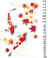 锦鲤 鲤鱼 落叶 23811113