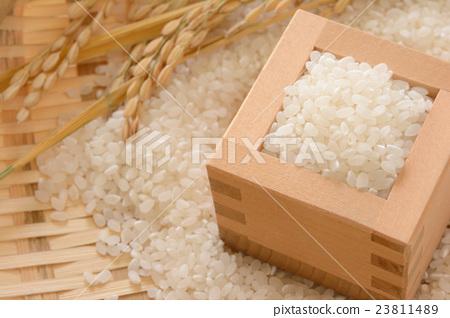 원숭이와 매스에 들어간 쌀과 벼 이삭 나뭇결 배경 23811489
