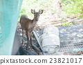 Keramen鹿keramagica 23821017