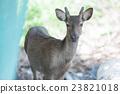 Keramen鹿keramagica 23821018