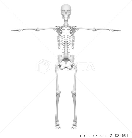 3D rendered image of T-shaped human bone - Stock