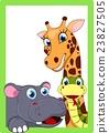 Zoo Animal On Frame 23827505