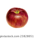 apple, apples, fruit 23828651