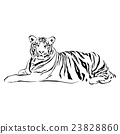 Tiger sitting, black and white, vector 23828860