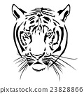 Tiger head black and whit, Vector 23828866