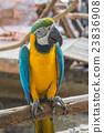 bird, parrot, head 23836908