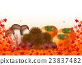 秋叶松茸蘑菇栗子柿子 23837482